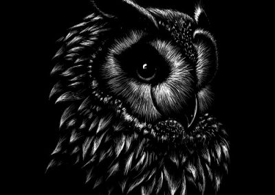 Wicked Blue Owl Creative Portfolo The Owl VIP Calgary Websites Social Media Blogging Marketing